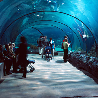 Things To Do in Mumbai: Taraporewala Aquarium
