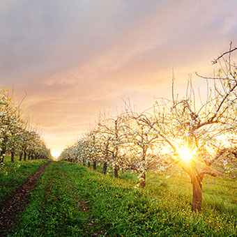 Things To Do in Lincolnville: Sewall Organic Orchard