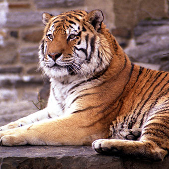 Things To Do in East Lansing: Potter Park Zoo