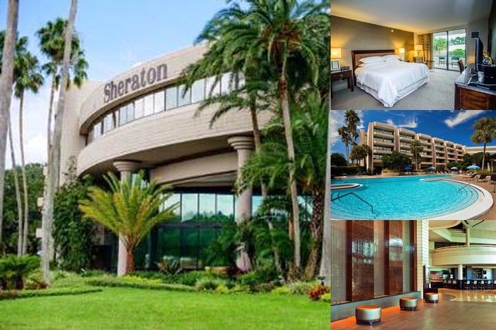 Sheraton Tampa East photo collage