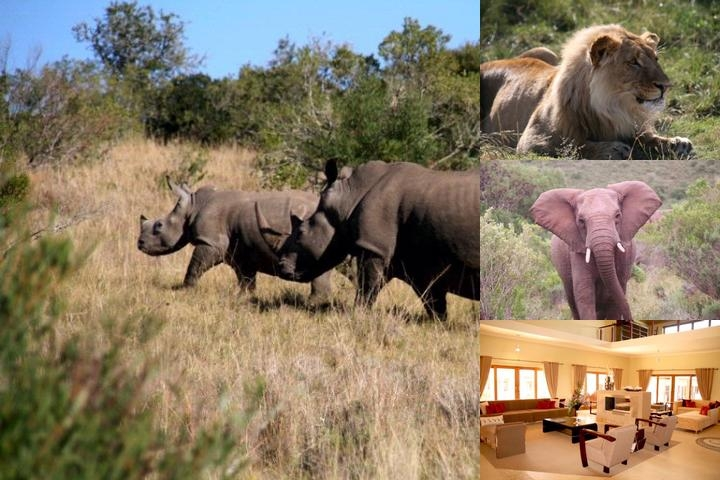 Kwantu Game Reserve photo collage