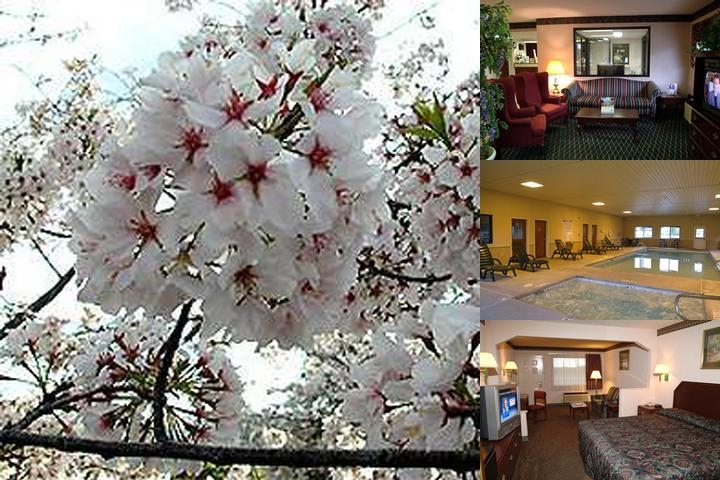 Best Western Inn & Suites photo collage