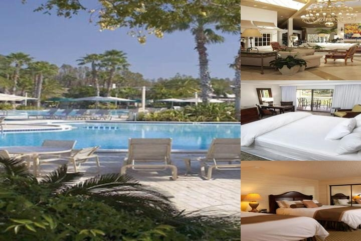 Saddlebrook Resort photo collage