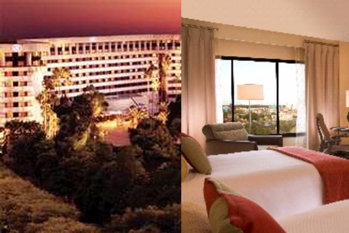 Hilton Orlando Lake Buena Vista photo collage