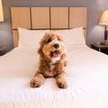 Photo of Candlewood Suites Chicago / Naperville