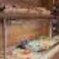 Photo of Holiday Inn Express Dresden City Centre