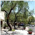 Photo of Homewood Suites Tucson / St. Phillip's Plaza
