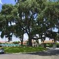 Image of Howard Johnson Inn Beaufort / Parris Island