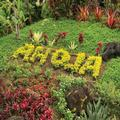 Image of Kauai Coast Resort at the Beachboy