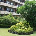 Image of Kona Seaside Hotel