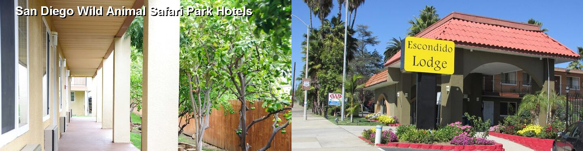Hotels Near San Diego Wild Animal Park