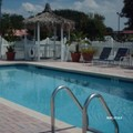 Pool image of Americas Best Value Inn Bradenton / Sarasota