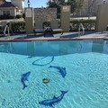 Pool image of Comfort Suites Mesquite