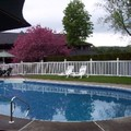Swimming pool at Grey Fox Inn