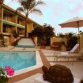 Photo of Hotel Pepper Tree Anaheim All Suites Hotel Pool