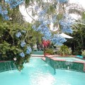 Photo of The Green House Inn Pool