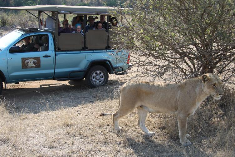 Open Vehicle Kruger Safari 7 of 10