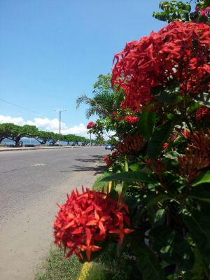 Flowers And A Beautiful Boulevard Is Puntarenas A Place To Be Quiet 5 of 9