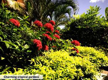 Tropical Gardens By The Sea 9 of 16