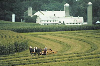 Amish Farms 23 of 27