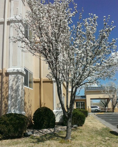 Spring Time At The Country Inn & Suites Wichita! 14 of 14
