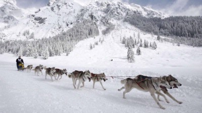 Sled Dogs In Sestriere 4 of 25