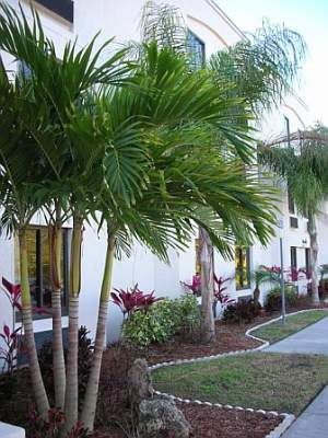 Tropical Landscaping Picture 7 of 14