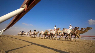 Nearby Camel Race Track 7 of 16