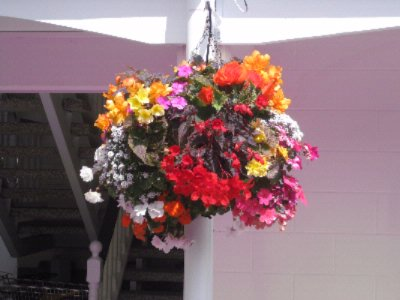 Summer Hanging Baskets 29 of 31