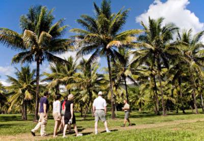 Coconut Odyssey Into Our Coconut Plantation 14 of 17