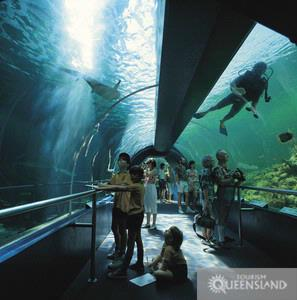 See The Sharks At Underwater World 15 of 15