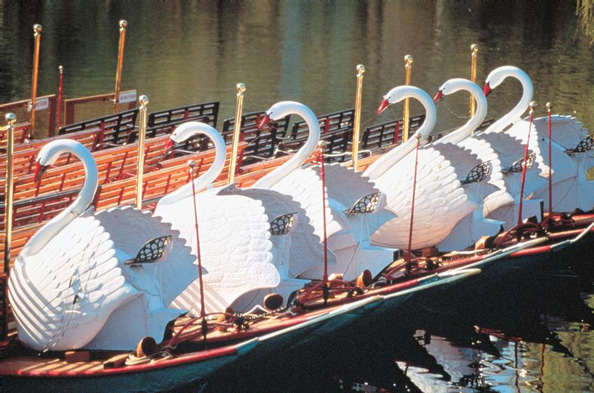 Swan Boats 4 of 13