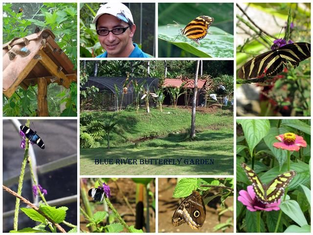 Butterfly Gardens 5 of 16