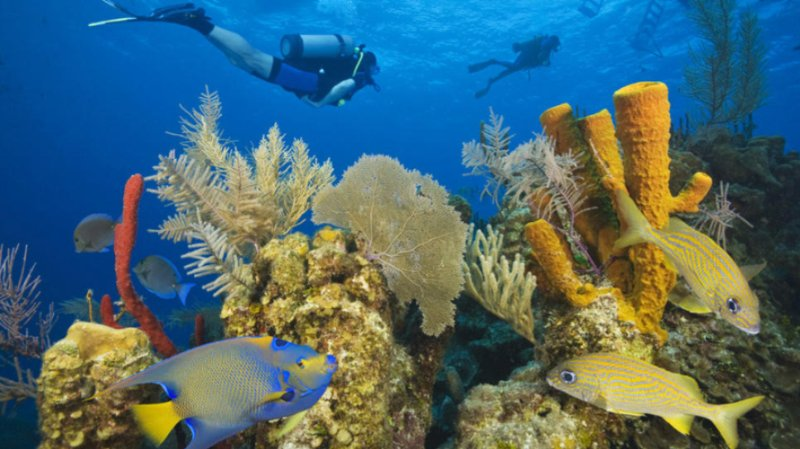 Explore The 2nd Largest Barrier Reef In The World. 21 of 31