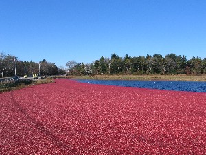 Cranberry Highway 4 of 12