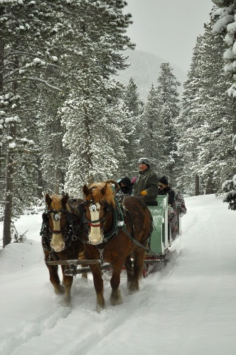 Sleigh Rides 21 of 24