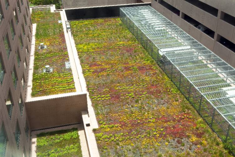 Green Roof 18 of 20