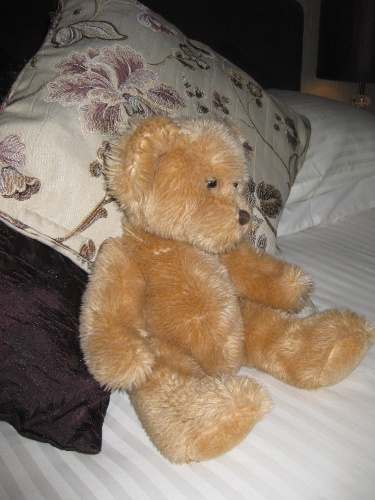 Teddy 6 of 8