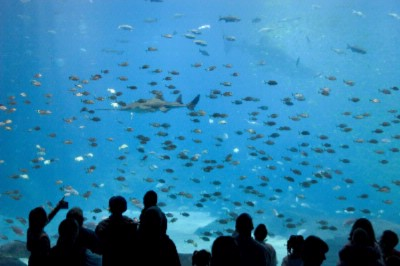 The Georgia Aquarium Is An Easy Drive From The Doubletree Hotel Alpharetta-Windward And Is The Largest Aquarium In The World! 10 of 11