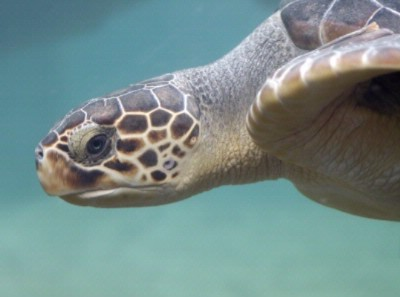 Loggerhead Park Is Nearby And Is Home To Amazing Creatures. 10 of 10