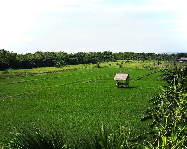 Rice Field Next To The Hotel 14 of 30