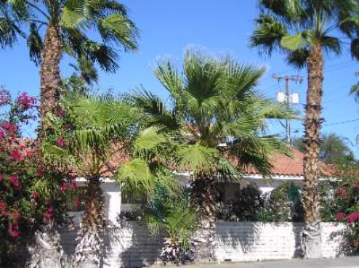 Palm Trees Aroun Property 15 of 26