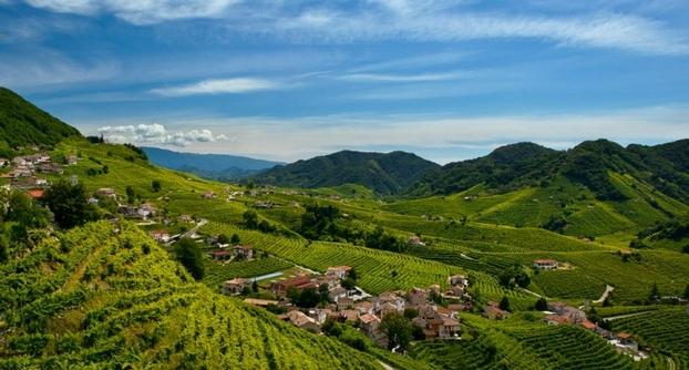 Prosecco Vineyards 15 of 18