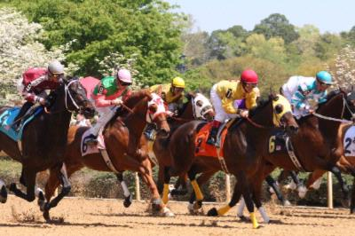 Oaklawn Park Located Just 5 Miles From Staybridge Suites 20 of 22