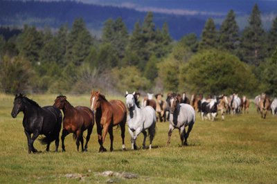 Horses Running In The Meadow At Black Butte Ranch 24 of 30