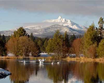 A Visit From The Swans On Phalarope Lake At Black Butte Ranch. 28 of 30