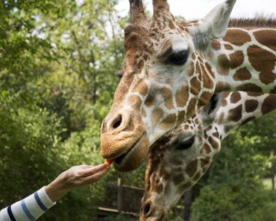 Fort Wayne Childrens Zoo For Great Family Enjoyment 12 of 21