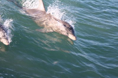 Dolphin Watch La Copa Bestwestern South Padre Island 22 of 28