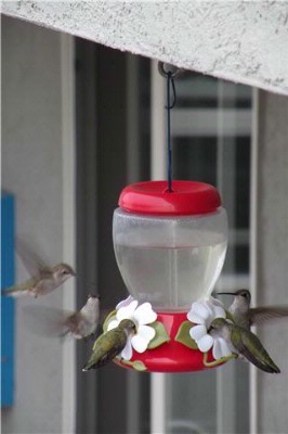 Some Of Our Hummingbird Friends 10 of 14