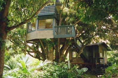 The Majestic Tree House 6 of 6